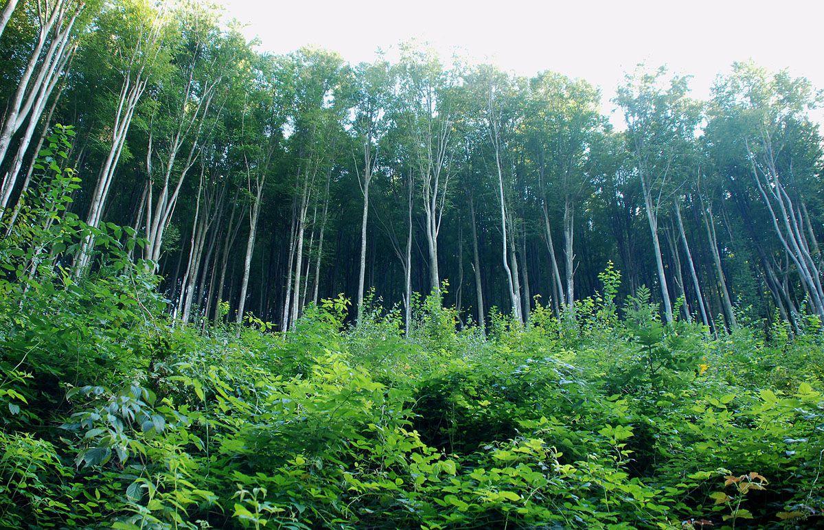 Ліс рубають... і штрафів не бояться