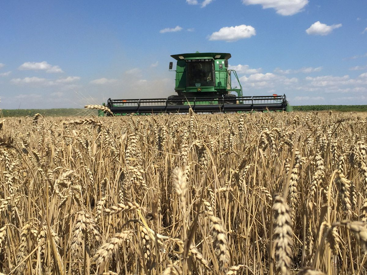 Винницкая область: Первый миллион тонн зерна собрали при контрастных намолотах