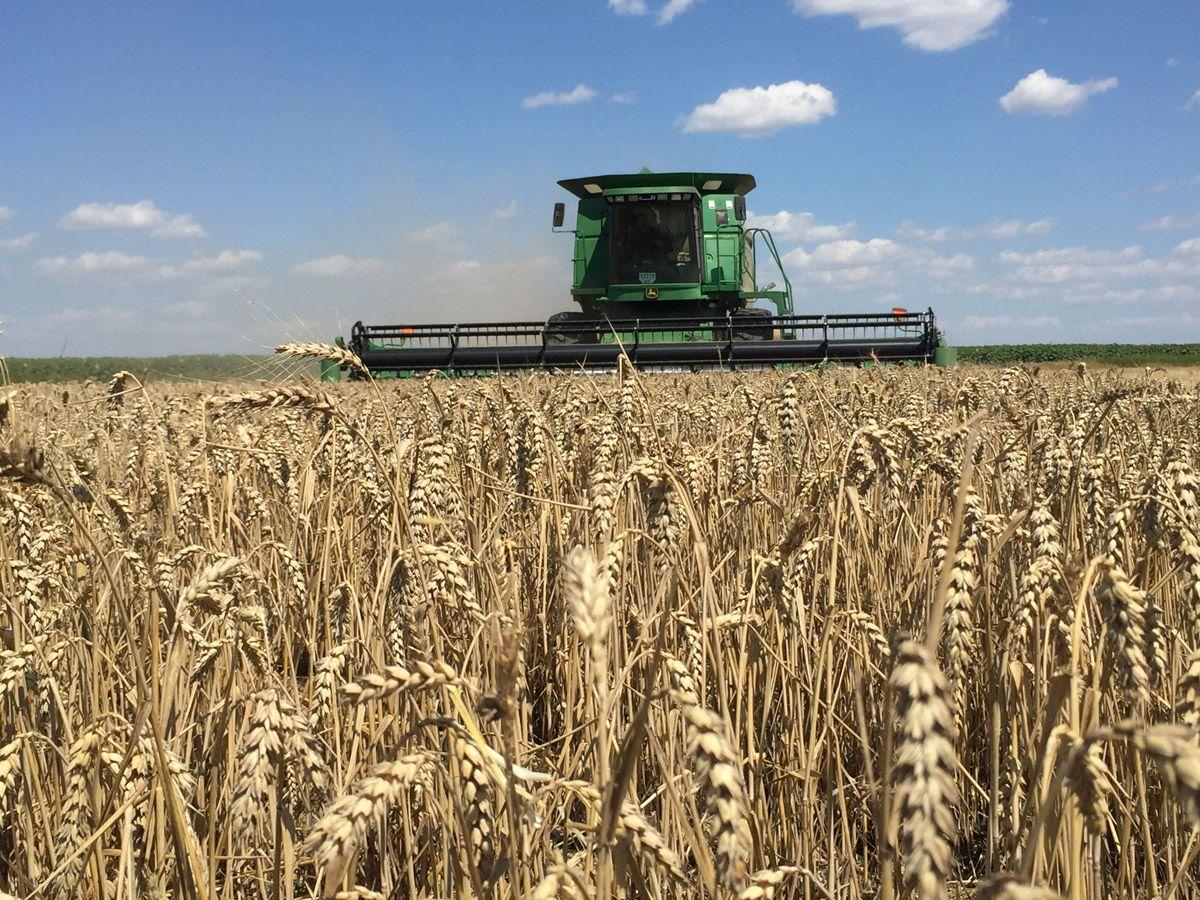 «Раннє» зерно зібрали. Та чи буде земля для нового засіву?