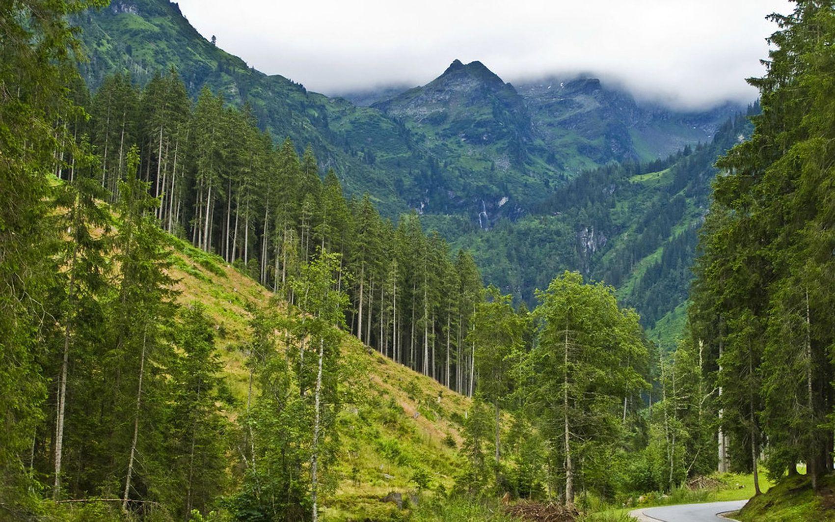 Ліс для Закарпаття — вище, ширше й більше, ніж ліс