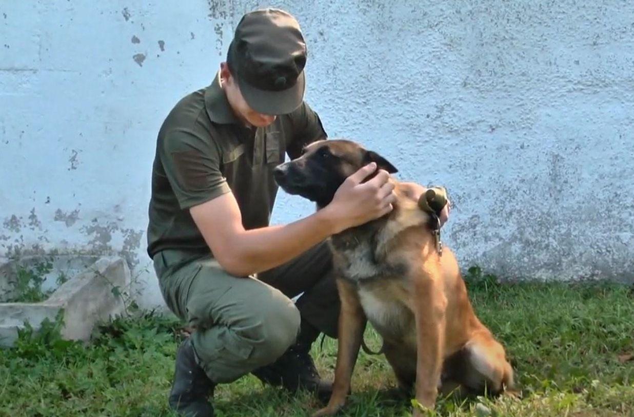 Хмельницкий: Медалью «За преданную службу» наградили... собаку