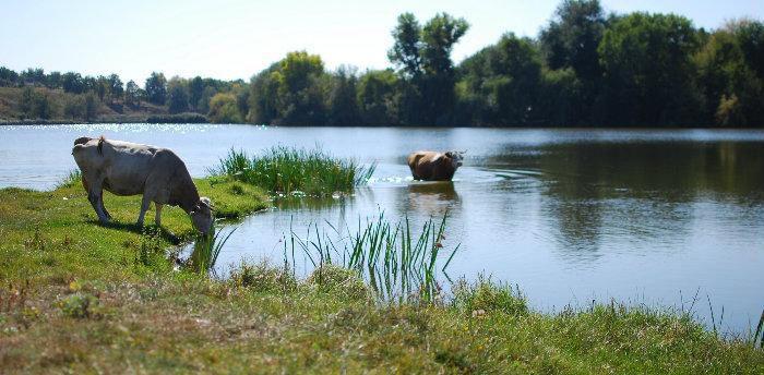 Сумщина: Землю і водойму повернули людям