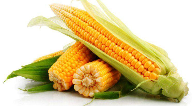 Кукурузы недосчитались
