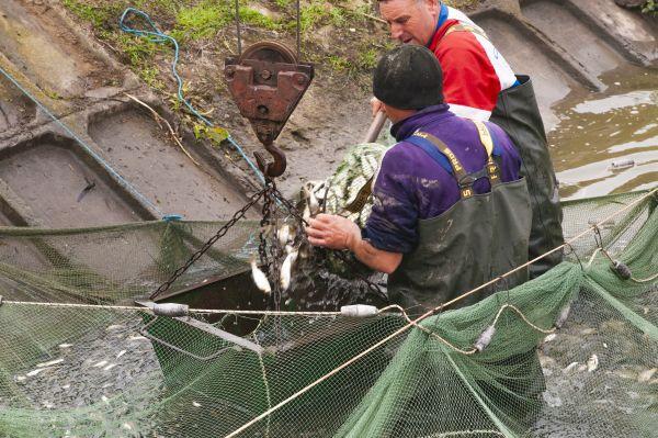Одеська область: В очікуванні рибного врожаю