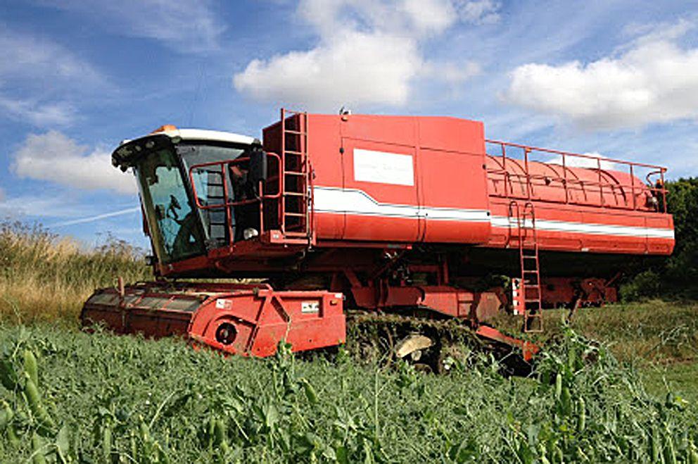Житомирщина: Из-за погоды — меньше зерна