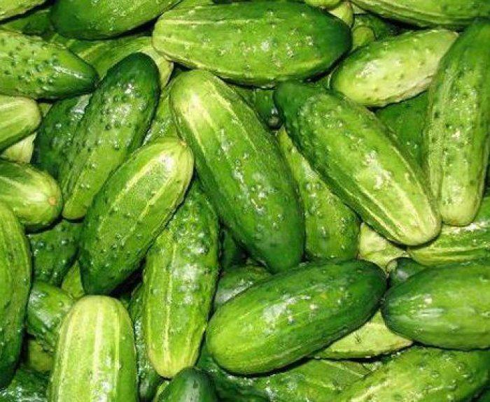 Чернігівщина: З'явилися нові сорти салату та огірків