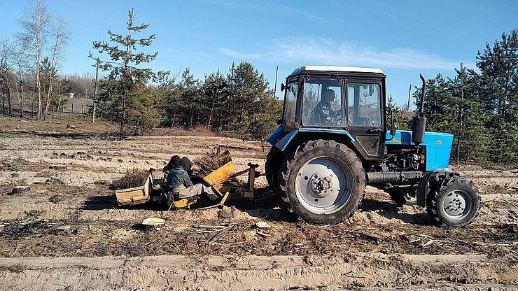 Полтавщина: Лісокультурну кампанію розпочинали з сосни