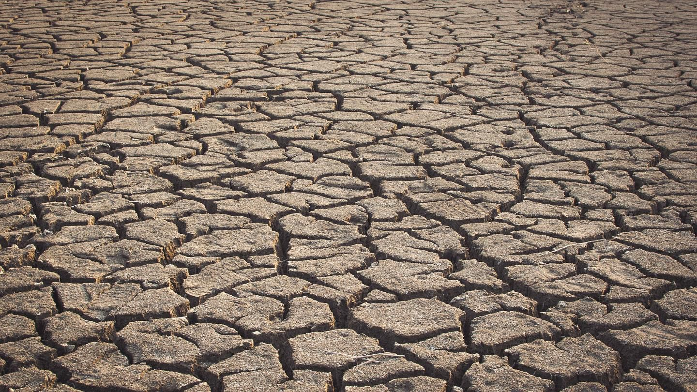 Посуха нищить навіть дерева