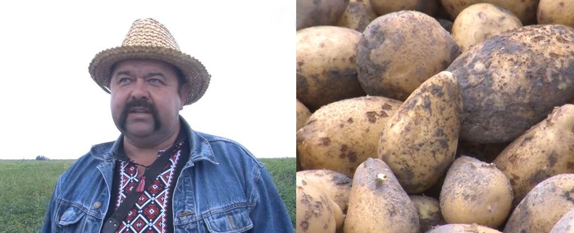 Луцьк: До картоплі — з повагою