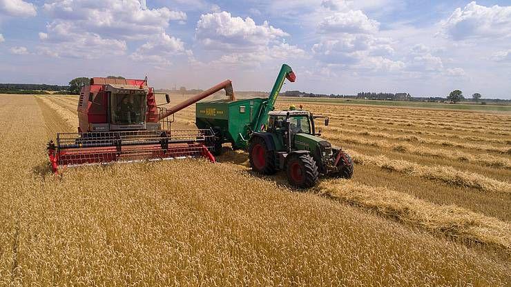 Дожди добавили в закрома каждую пятую тонну зерна