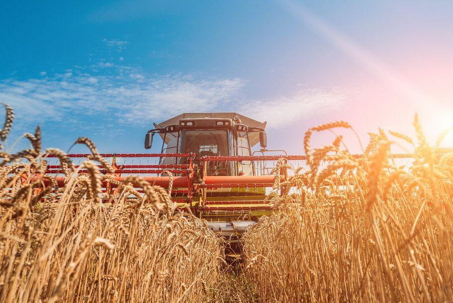Щедрый урожай не сдерживает цен