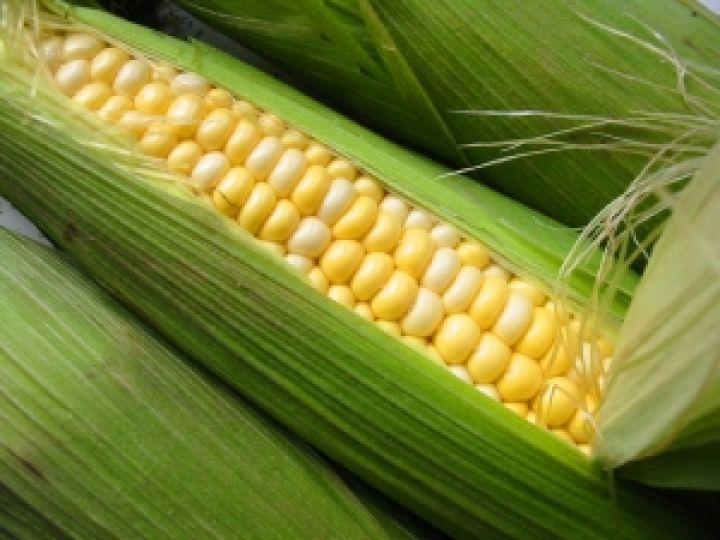 Бразилия не хочет зависеть от импортной пшеницы