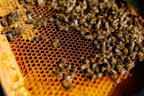 Херсонщина: Мед скупают дешево