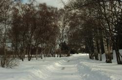 Київ, Центральний ботанічний сад НАНУ.