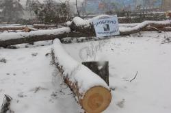 Київ, біля метро «Дарниця» незаконно вирублено дерева.