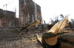 Київ, проспект Перемоги. Вирубано дерева під будівництво.